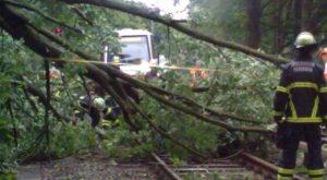 Sturmtruppen der HOCHBAHN – Was tun gegen Bäume im Gleis?